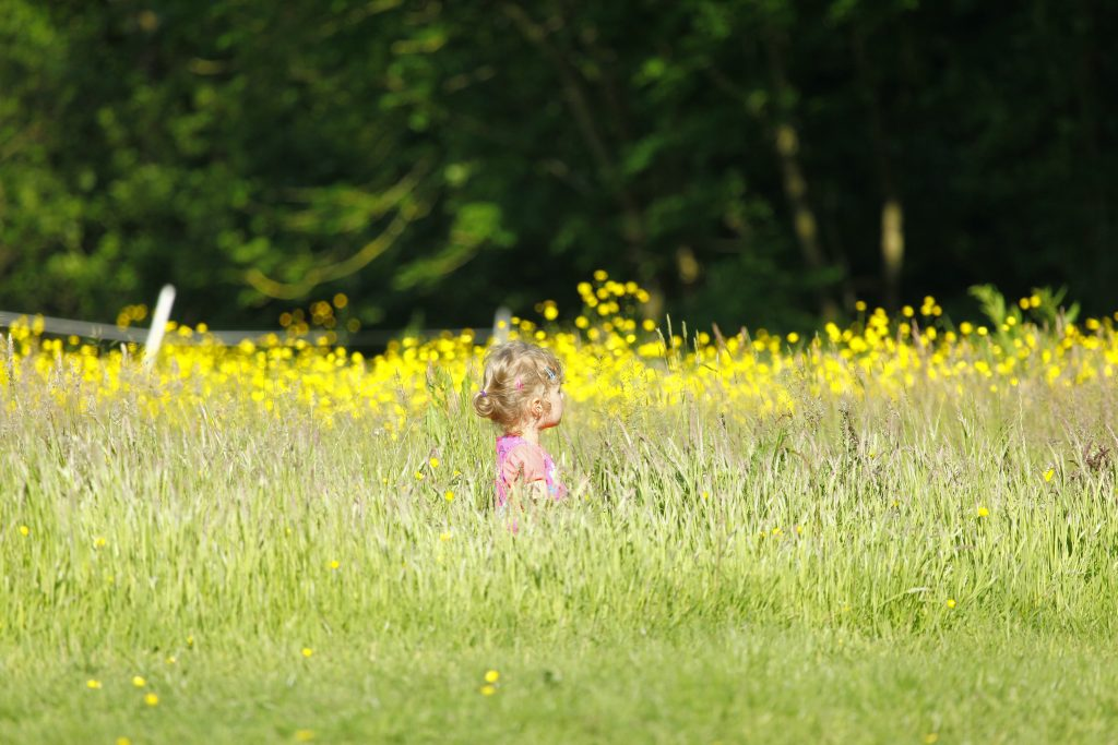 blonde child in the hay meadow