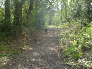 a Pleasant hour's stroll along the bridleway