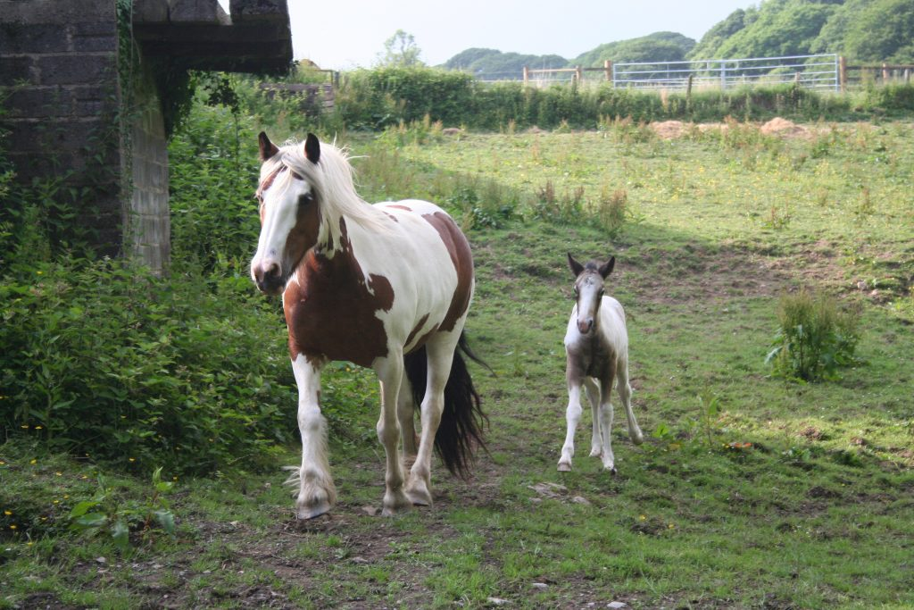Orange and Bluebell Mom and Foal.